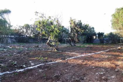 Buildable plot in Trebaluger, Minorca