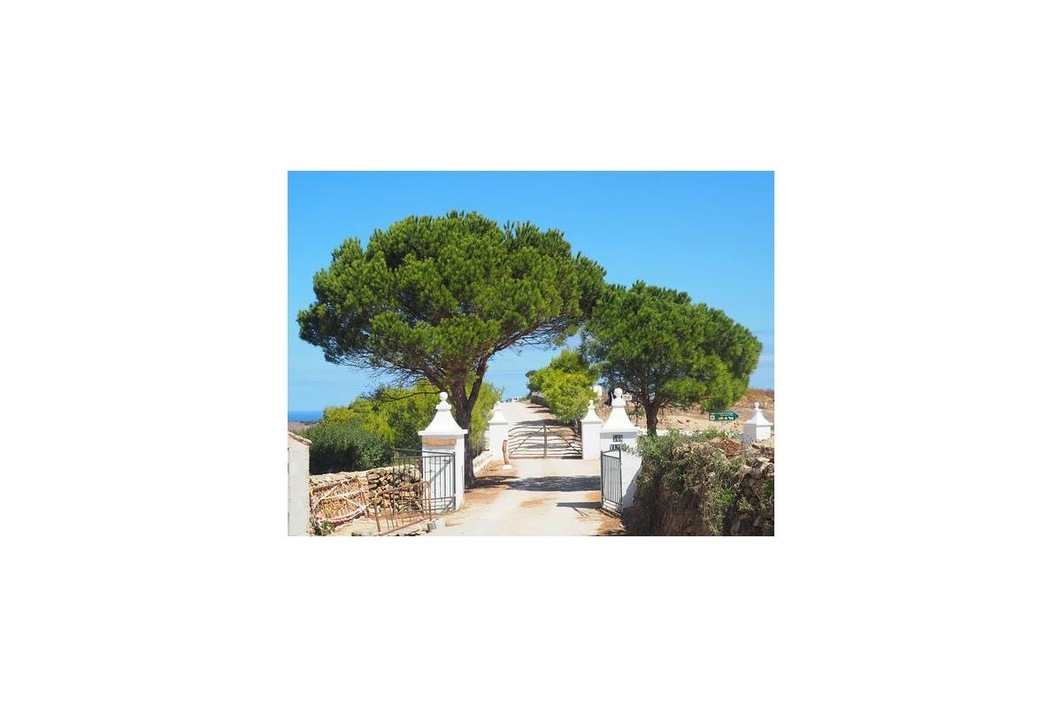 Menorca: Restaurant Passió Mediterrània, Es Tast De Na Silvia, Son Vives and stately home.