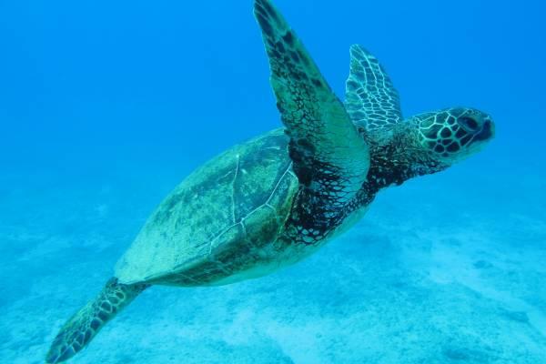 Menorca - un viaje ecológico