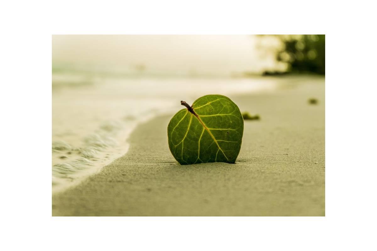 Minorque - un voyage écologique